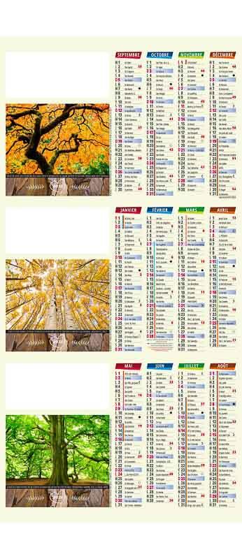 calendrier de comptoir arbres spectaculaires