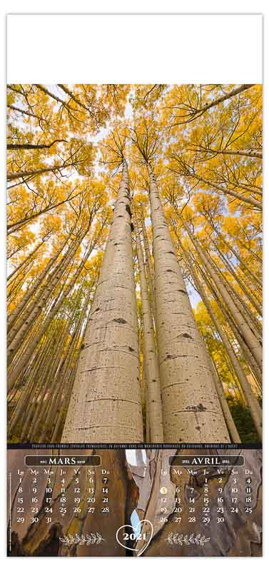 calendrier-publicitaire-entreprise-mural-illustre-7-feuilles-arbres-en-majeste-