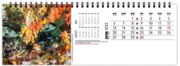 calendrier-publicitaire-chevalet-maxi-de-table-13-feuilles-plongee-juin-2022